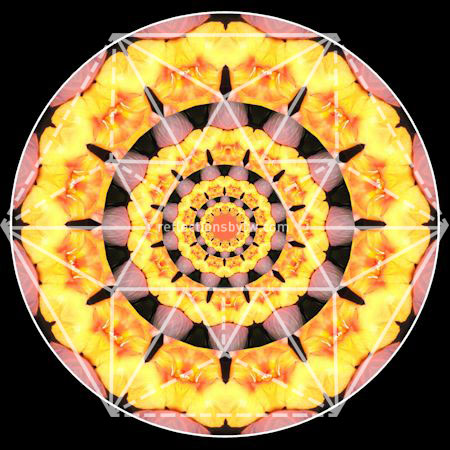 Yellow Flower with Pink Leaf Mandala