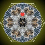 Puppy-Love-Mandala-reflections-by-fw