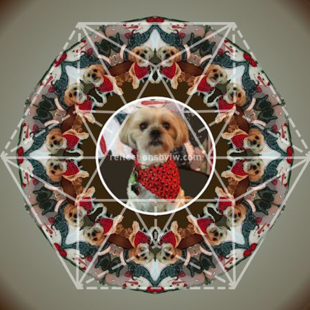 Red-Dog-Mandala