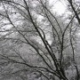 Snow-Branches_Maple-reflections-by-fw