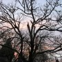 sunset-Branches-reflections-by-fw
