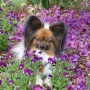 papillion-in-purple-flowers-reflections-by-fw