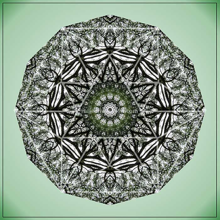 Elm – Spring Leaves Mandala